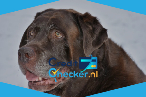 Oudere hond
